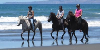 Icelandic Horse Treks