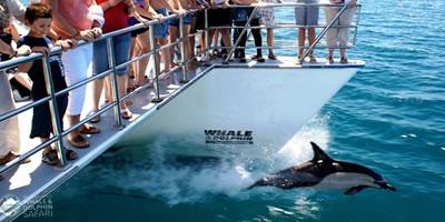 Auckland Dolphin Safari