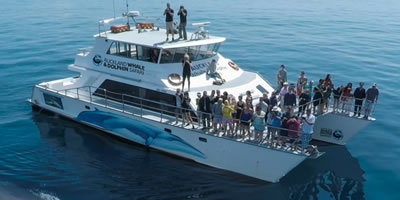 Auckland Whale Safari