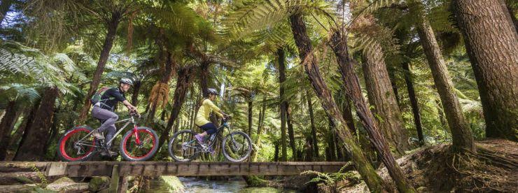 Whakarewarewa Forest (Credit: Vaughan Brookfield)