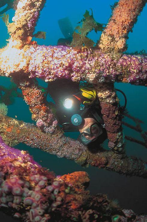 Image Credit:NorthlandNZ.com